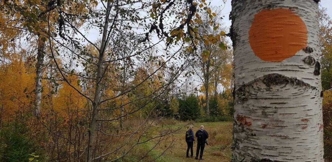 Närbild på ett träd med ett promenerande par i bakgrunden.