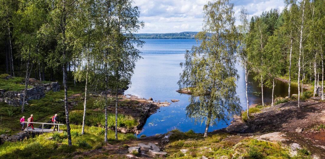 Vy över en skogsglänta med sjö i bakgrunden.